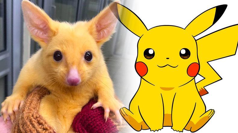 Furor en Australia por la aparición de Pikachu