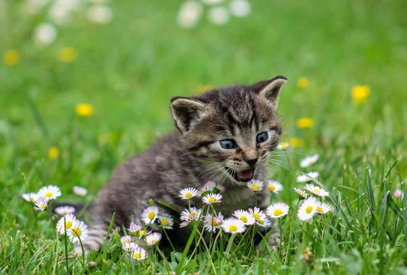 Olores que vuelven locos a los gatos