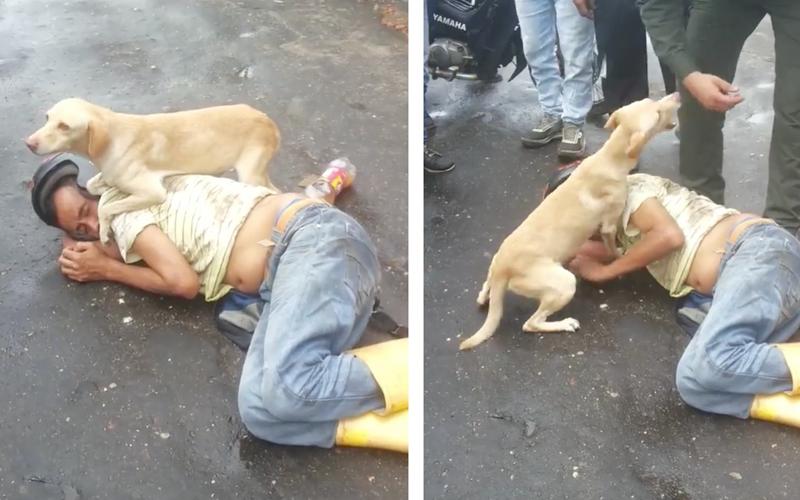 [VIDEO] Perro fiel | Su dueño dormía borracho en la calle y el lo protegió