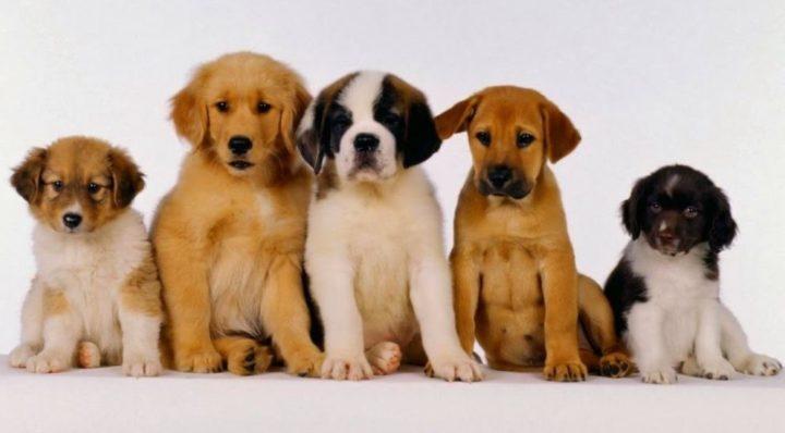 La raza de perro ideal según tu signo