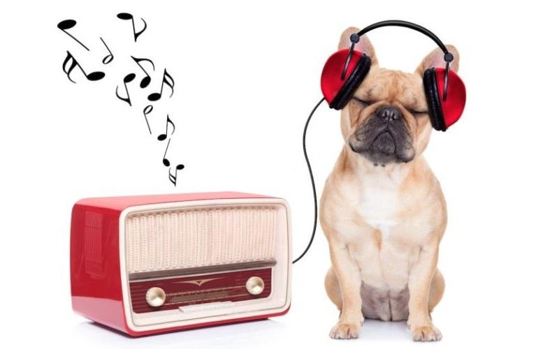 El rock y el reggae, los preferidos de los perros